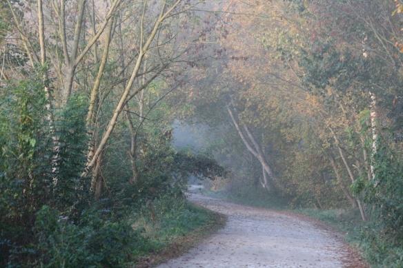 Jean-Francois Grizonnet - Chemin d'automne à Tonnay-Boutonne